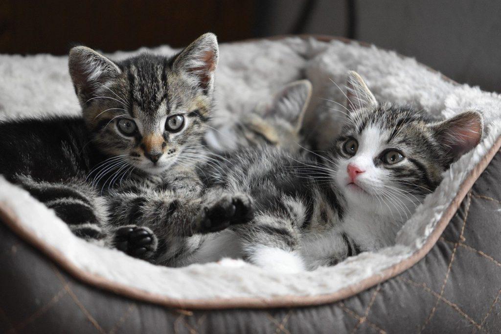 cat-4282123_1280
